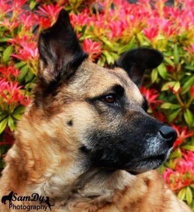 kokosolie honden