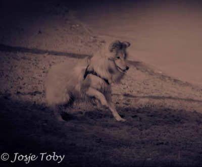 puppy met een missie