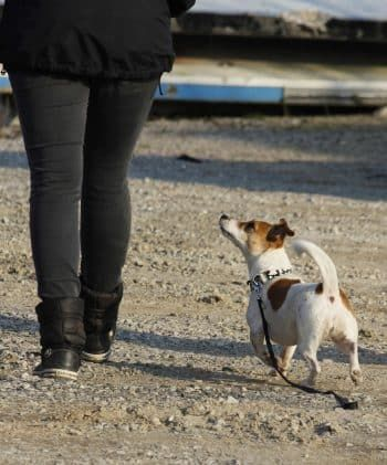gedrag van hond trainen