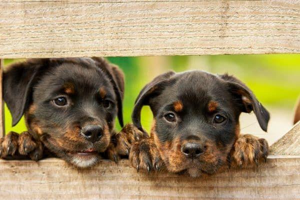 gevaarlijke honden uitzonderingen
