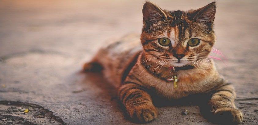 verzekering kat