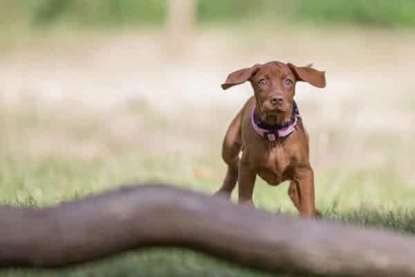 fotograaf hond