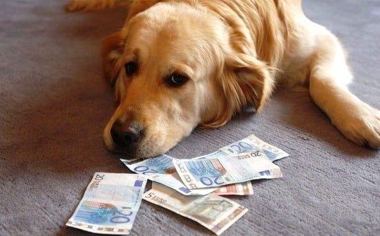 hond belasting