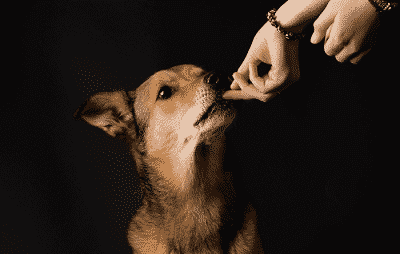 hond belonen