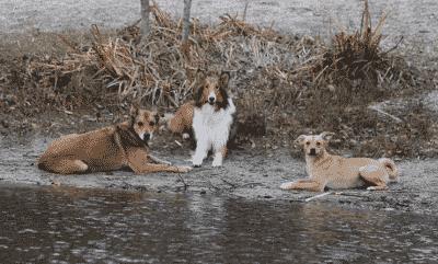 hond opvoeden