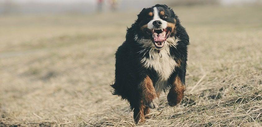 honden ziektekostenverzekering vergelijk